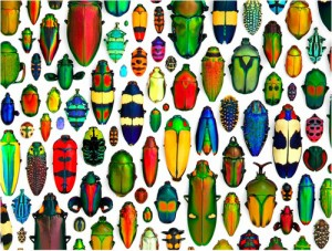 How About Some Bugs for Your Walls?