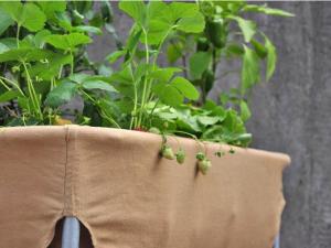 Urban Gardener: Hochbeet