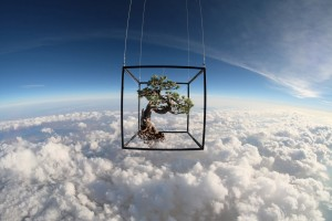 Azuma Makoto's Botanical Space Travel