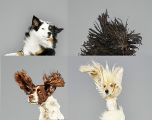 Seven Cute Pooches Jumping For Joy
