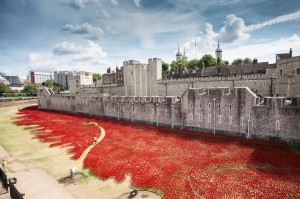88,249 Poppies to Remember