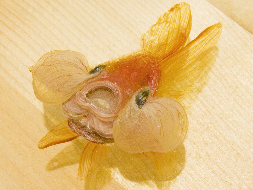 11_Goldfish Salvation_Riusuke Fukahori