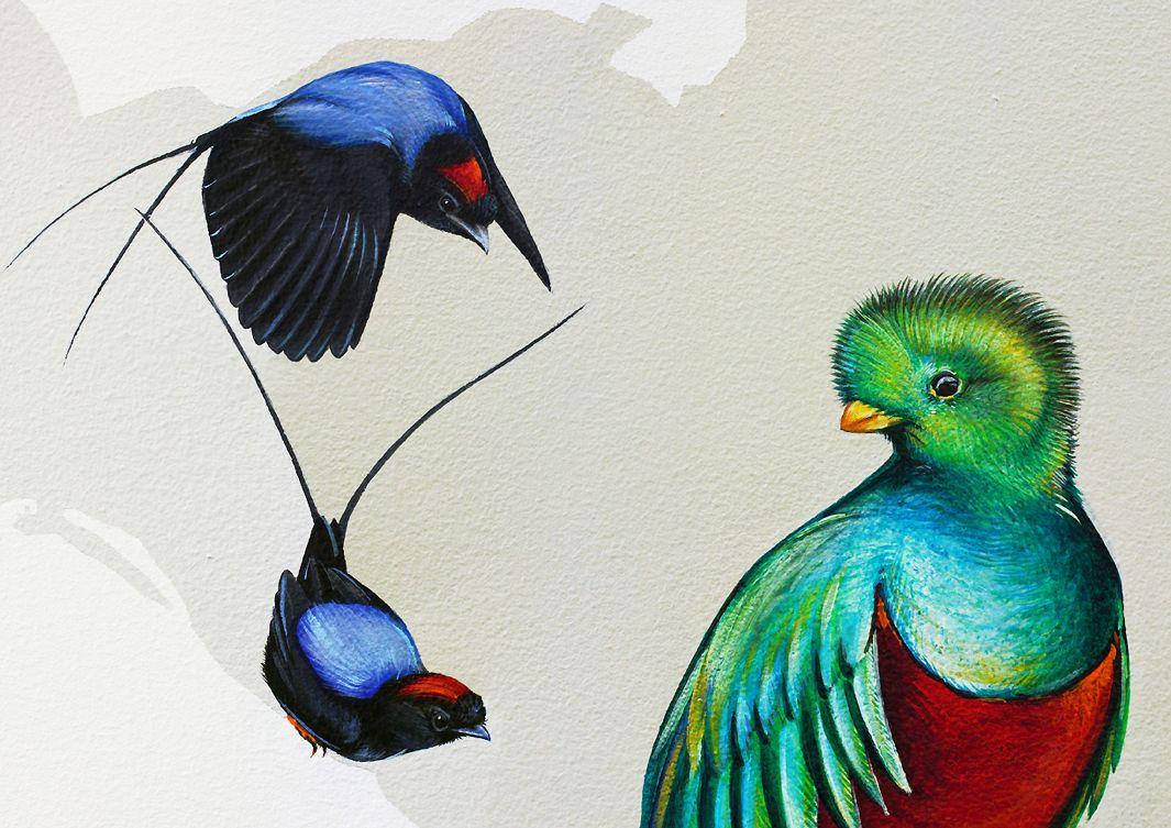 The 2 800 Square Foot Wall Of Birds Alfalfa Studio