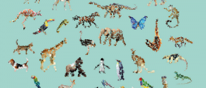 Yoni Alter Dotted Animals
