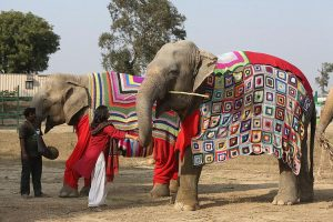 The Happy and Stylish Rescued Elephants